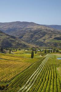 Felton Road Vineyard, Autumn, Bannockburn, Central Otago, South Island, New Zealand by David Wall