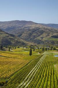 Felton Road Vineyard, Autumn, Bannockburn, Central Otago, South Island, New Zealand by David Wall