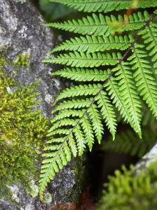 Ferns near Lake Moeraki, West Coast, South Island, New Zealand by David Wall