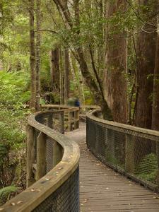 Footpath Through Forest To Newdegate Cave, Hastings Caves State Reserve, Tasmania, Australia by David Wall