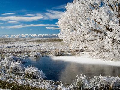 Frozen Pond and Hoar Frost on Willow Tree, near Omakau, Hawkdun Ranges, Central Otago, New Zealand