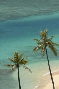 Hawaii, Oahu, Honolulu, Waikiki, Fort Derussy Beach and Palm Trees by David Wall