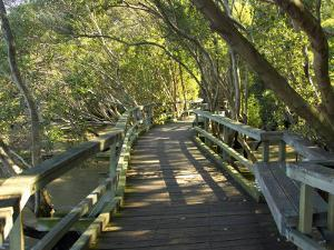 Mangrove Boardwalk, City Botanic Gardens, Brisbane, Queensland, Australia by David Wall