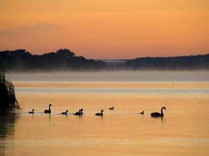 Murray River at Dawn, Mannum, South Australia, Australia by David Wall