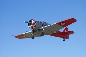 North American Harvard, or T-6 Texan, or SNJ, War Plane by David Wall