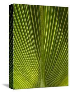 Palm Frond, Nadi, Viti Levu, Fiji, South Pacific by David Wall