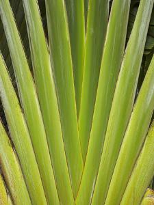 Palm Frond Pattern, Coral Coast, Viti Levu, Fiji, South Pacific by David Wall