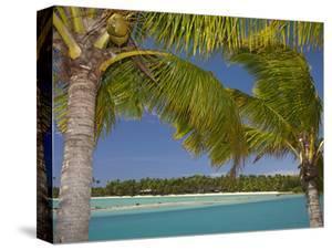 Palm Trees and Lagoon, Musket Cove Island Resort, Malolo Lailai Island, Mamanuca Islands, Fiji by David Wall