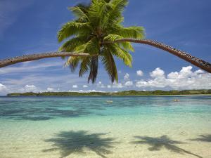 Palm Trees, Shangri-La Fijian Resort, Yanuca Island, Coral Coast, Viti Levu, Fiji, South Pacific by David Wall