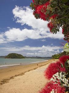 Pohutukawa Tree and Beach, Paihia, Bay of Islands, Northland, North Island, New Zealand by David Wall