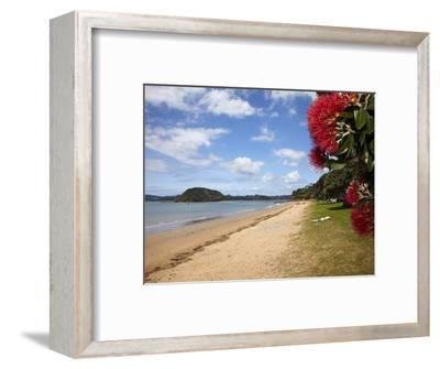 Pohutukawa Tree and Beach, Paihia, Bay of Islands, Northland, North Island, New Zealand