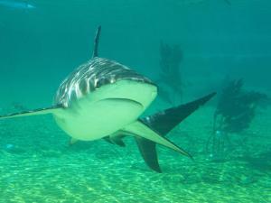 Shark, Sea World, Gold Coast, Queensland, Australia by David Wall