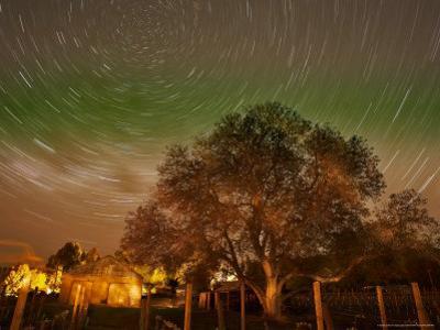 Star Trails Over Walnut Tree, Domain Road Vineyard, Central Otago, South Island, New Zealand by David Wall