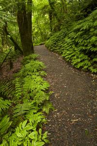 Track to Mangapohue Natural Bridge, Waitomo District, Waikato, North Island, New Zealand by David Wall