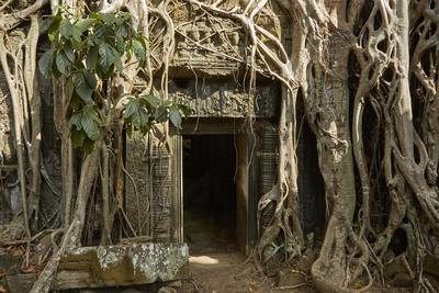 Tree Roots Growing over Ta Prohm Temple Ruins, Angkor World Heritage Site, Siem Reap, Cambodia