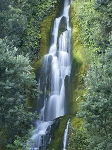 Waterfall, Centennial Gardens, Napier, Hawkes Bay, North Island, New Zealand by David Wall