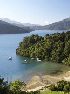 Whenuanui, Becks Bay, Marlborough Sounds, South Island, New Zealand by David Wall