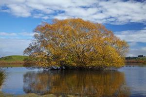 Willow Tree, Lake Tuakitoto, Near Benhar, South Otago, South Island, New Zealand by David Wall