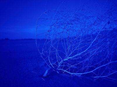 Blue Dunes, Mojave National Park