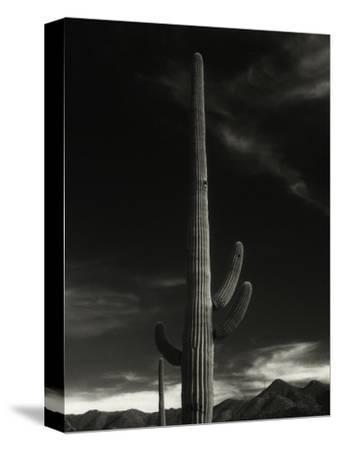 Cactus in Capitol Reef National Park, Utah