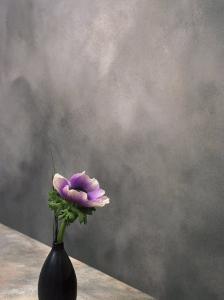 Pink Anemone in Vase by David Wasserman
