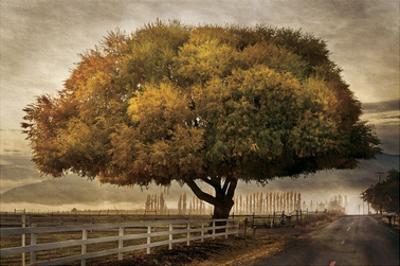 Autumnal Landscape by David Winston
