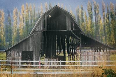 Barn and Poplars