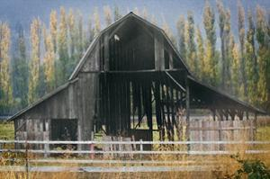 Barn and Poplars by David Winston