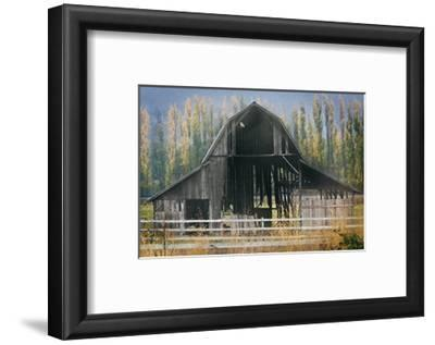 Barn and Poplars