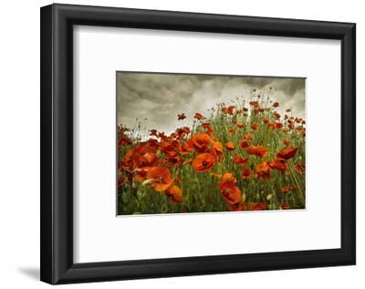 Bobbi's Poppies