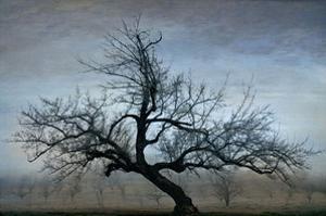 Farm House Tree by David Winston