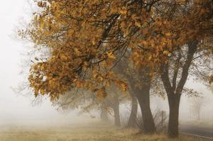 Fog in Fall by David Winston