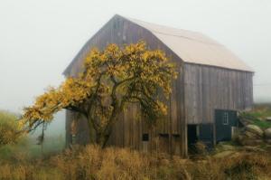 Golden Promises by David Winston