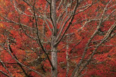 Lithia Park in Fall by David Winston
