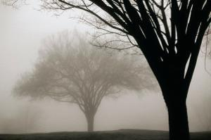 Memories of Winter by David Winston