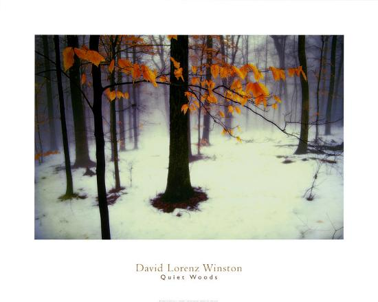 david-winston-quiet-woods
