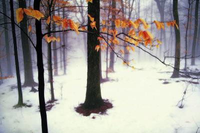 Quiet Woods by David Winston