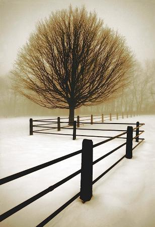 david-winston-solitude