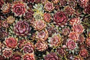 Succulents by David Winston