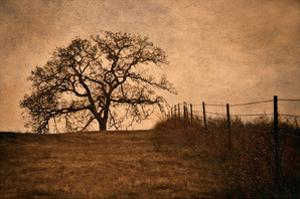 Tree and Fence II by David Winston