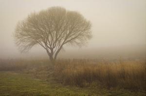 Tree in Field by David Winston