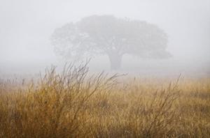 Tree in Fog by David Winston