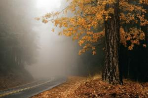 Yellow Leaves in Fog by David Winston