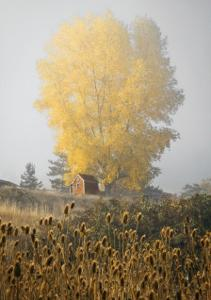 Yellow Tree and Teasel by David Winston