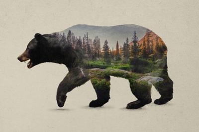 The North American Black Bear