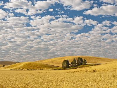 Dawn Breaks on Wheat Field, Walla Walla, Washington, USA-Richard Duval-Photographic Print