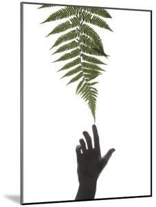 Hand Touching a Ponga or Silver Tree Fern Frond by Dawn Kish