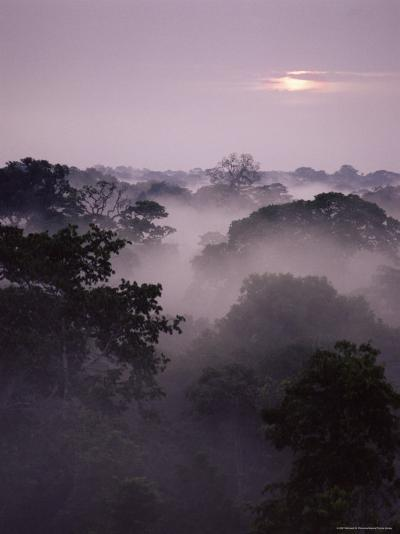 Dawn Over Canopy of Tai Forest, Cote D'Ivoire, West Africa-Michael W^ Richards-Photographic Print