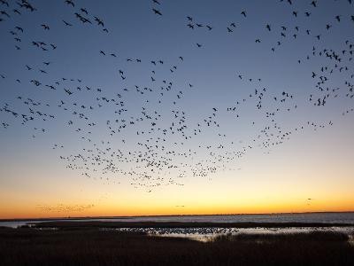 Dawn over the Atlantic Ocean-Karen Kasmauski-Photographic Print