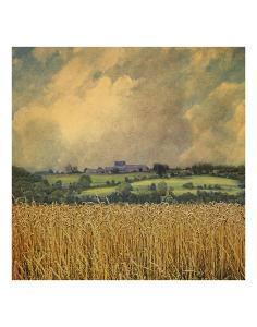 Picardy Wheat by Dawne Polis